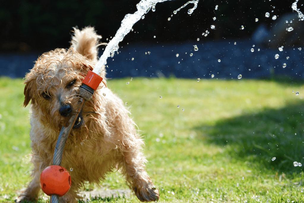 Hundezaun für den Garten