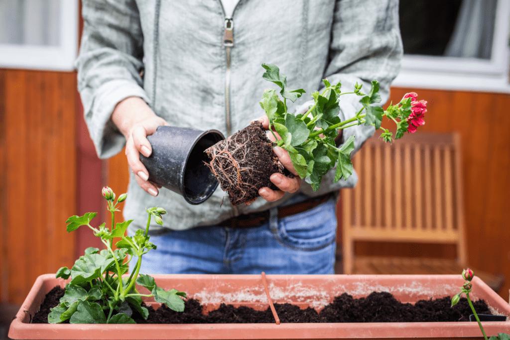 Frau bepflanzt Blumenkasten für Doppelstabmattenzaun